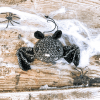 Fledermaus Häkelanleitung